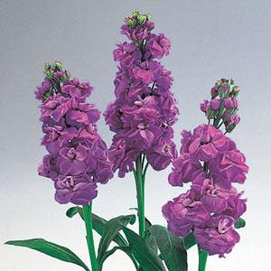 紫色风景人物画
